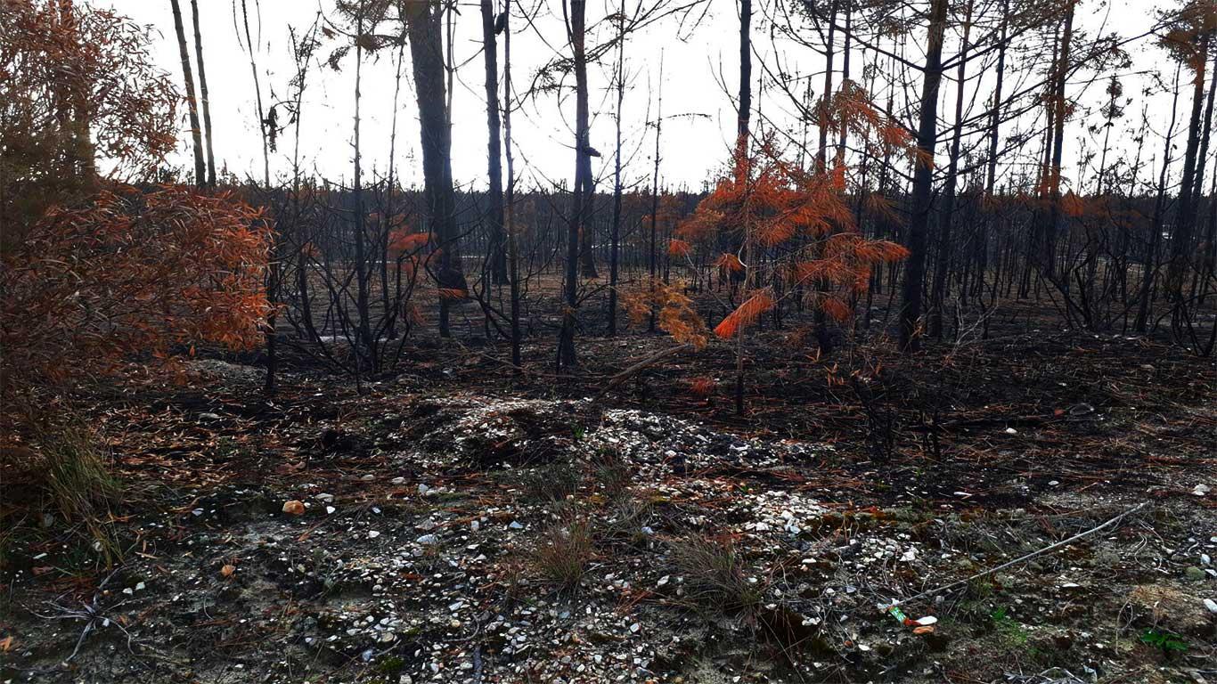 Destroços no meio do pinhal, com poucos vestígios de vegetação e cor.