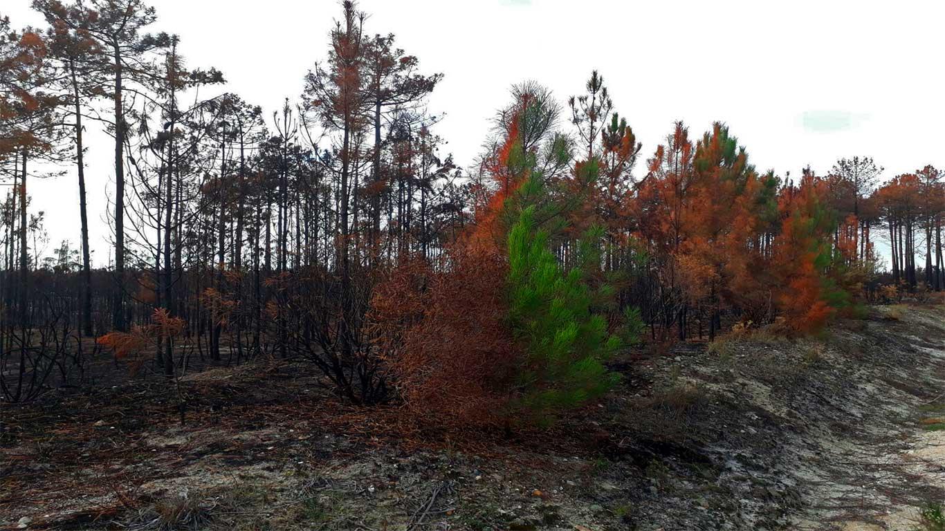 Arbusto metade queimado pelo fogo e outra metade intacta.
