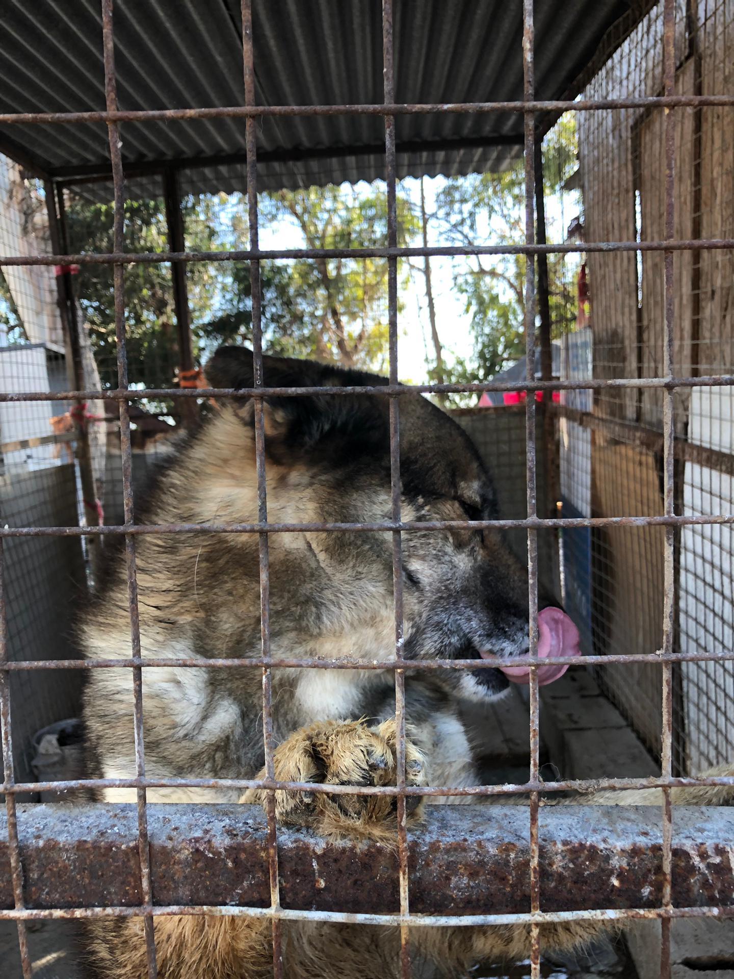 Puppy, um dos cães da Associação que está num canil