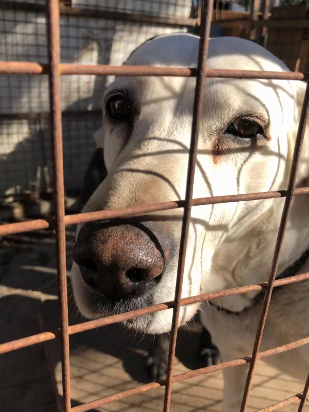 Cadela abandonada resgatada pela instituição