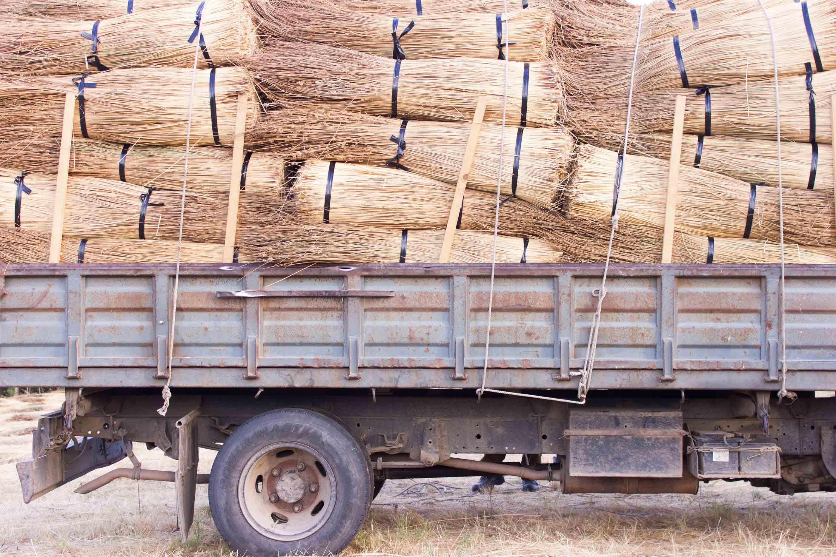 Camião transportando o junco que será utilizado para produzir as cestas da TOINO ABEL