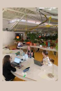 Grupo de 4 mulheres e um homem a trabalhar em computadores em duas mesas separadas numa estufa com plantas verdes em pequenos vazos de barro.
